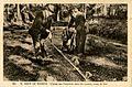 Mont-de-Marsan Palombes prises au filet dans les Landes.jpg