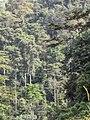 Montane rainforest near to Sérédou (Ziama).jpg