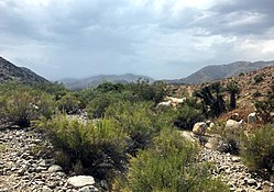 Little Morongo Canyon, Morongo Valley, California