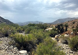 Morongo Valley, California census-designated place in California, United States