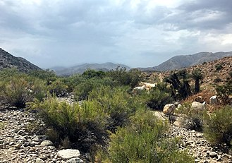 Morongo Valley, California - Little Morongo Canyon, Morongo Valley, California