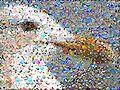 Mosaicr seagull.jpg