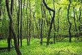 Mountaintop Forest (5) (9525587679).jpg