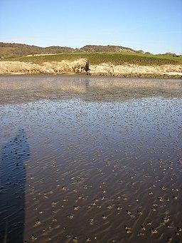 Mudflats near Far Arnside - geograph.org.uk - 1616466