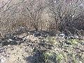 Mukacheve, Zakarpats'ka oblast, Ukraine - panoramio (5).jpg