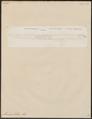Muraena zebra - 1798-1876 - Print - Iconographia Zoologica - Special Collections University of Amsterdam - UBA01 IZ15300156.tif