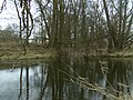 Nördliche Regnitz Mündung.jpg