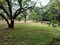 Nairobi Arboretum Park 30.JPG
