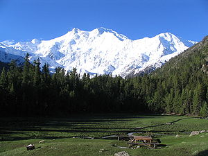 Forestry in Pakistan - View of 'Fairy Meadow' at Nanga Parbat showing conifer forest of Picea smithiana and Pinus wallichiana.