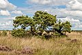Nationaal Park Drents-Friese Wold. Locatie Fochteloërveen 01-09-2020. (actm.) 21.jpg