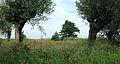 Nationaal Park Weerribben-Wieden 03.JPG