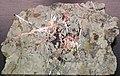 Native copper stockwork in skarn rock (Madison Gold Skarn Deposit, Late Cretaceous, 80 Ma; west of Silver Star, Montana, USA) 5.jpg