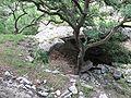 Natural Bridge Cavern Entrance.jpg