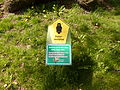 Naturdenkmal 3-2, Eiche vor dem neuen Rathaus, Bild 4.JPG