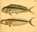 Naturgeschichte in Bildern mit erläuterndem Text (Taf. XLVII) (6058664119).jpg
