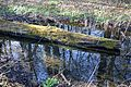 Naturschutzgebiet Haseder Busch - Nebengewässer (1).jpg