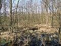 Naturschutzgebiet Ramper Moor im Landschaftsschutzgebiet Schweriner Seenlandschaft im Landkreis Ludwigslust-Parchim (2).jpg