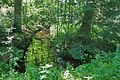 Naturschutzgebiet Trunnenmoor IMG 2678.jpg