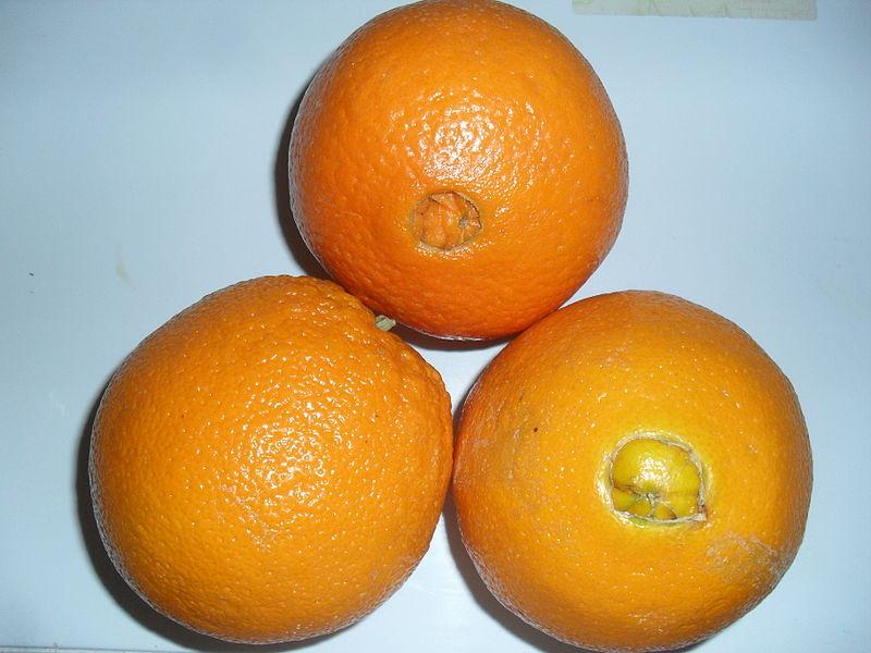 File:Navel Oranges.JPG