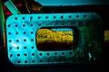 Neon Boneyard (39146144650).jpg