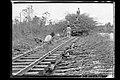 No Trecho Pantanoso do Rio Abunã, Trabalhadores Executam o Assentamento dos Trilhos sobre uma Estiva de Galharia para a Passagem do Trem de Lastro - 970, Acervo do Museu Paulista da USP.jpg