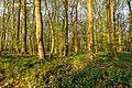 Nordkirchen, Naturschutzgebiet Ichterloh -- 2018 -- 2103.jpg