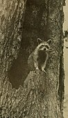 North American fauna (1889) (14802351333).jpg