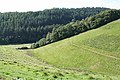 North Molton, towards Barton Wood - geograph.org.uk - 533263.jpg