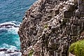 Northern Gannets St Mary Cape Newfoundland (40650840394).jpg