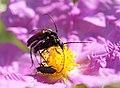 Nostres amics, els insectes - Nuestros amigos, los insectos - Friends insects (5168423697).jpg