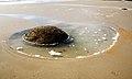 On the beach Moeraki.NZ (12474760975).jpg