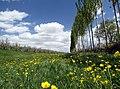 Orchard in Kul Tapa.jpg