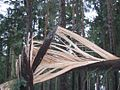 Orkan Kyrill, Sturmkraftauswirkung im Detail, Tharandter Wald.jpg