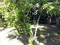 Orto botanico di Napoli 78.jpg