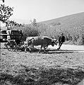 Ossenkar met oogstkuipen, Bestanddeelnr 254-4188.jpg