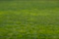 Out of Focus Green Backgounds-10.jpg