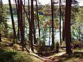 Płęsno Lake (gm. Chojnice).jpg