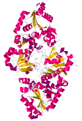 GDP-fucose protein O-fucosyltransferase 1 - Image: POFUT 1 Caenorhabditis elegans