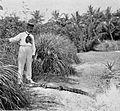 PSM V54 D348 Young pet alligator.jpg