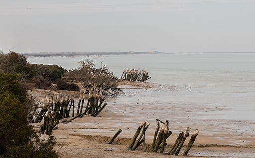Paisaje en el Parque de Doñana, España, 2015-12-07, DD 16