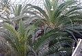 Palmiarnia Zielonogórska - środek2.jpg