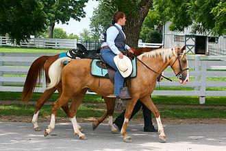 Kentucky Mountain Saddle Horse - A palomino Saddle Horse