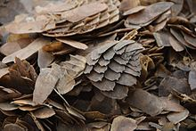 220px-Pangolin_scale_burn_in_Cameroon._Credit-_Kenneth_Cameron_-_USFWS_%282%29_%2832575640450%29.jpg