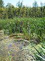 Parc-nature du Bois-de-l-ile-Bizard 36.jpg