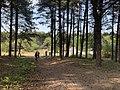 Parc Marquenterre - Saint-Quentin-en-Tourmont (FR80) - 2021-05-29 - 2.jpg