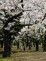 Parc Yoyogi-koen.jpg