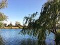 Parco Sorrico lago Cavo.jpg