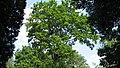 Parcul Central - Bistrita (683499033).jpg