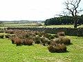 Park Wall Farm, near Crook - geograph.org.uk - 151635.jpg