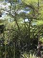 Parque del Este 2012 003.JPG